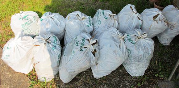 雑草を詰めたゴミ袋12袋