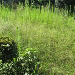 電動草刈機で庭をきれいに