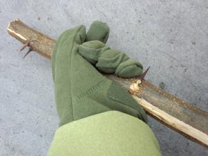 ハリエンジュの幹のトゲを握る_その2