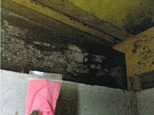 床下のカビ_木材腐朽菌