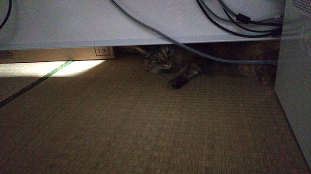 ネコもためらうオフィスデスクの隙間
