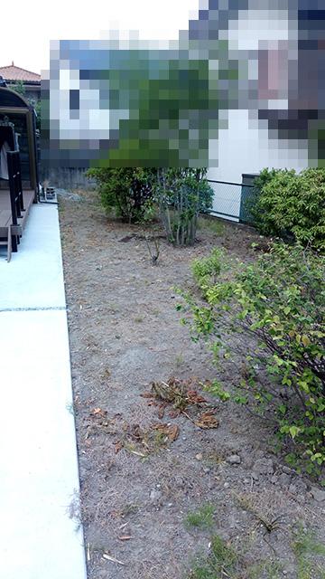 除草剤散布10日後の庭