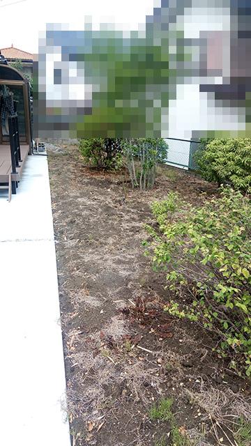 除草剤散布14日後の庭