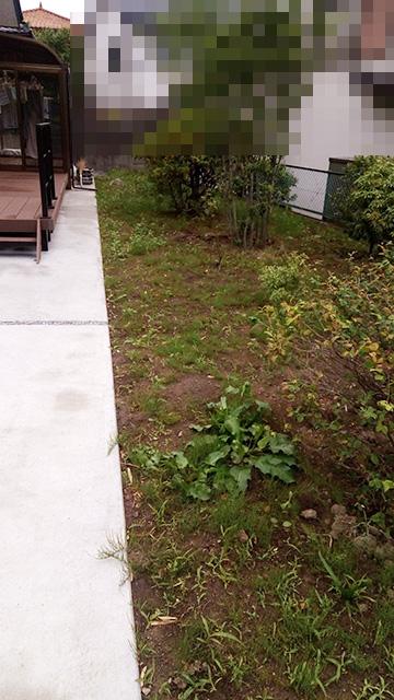 除草剤散布2日後の庭