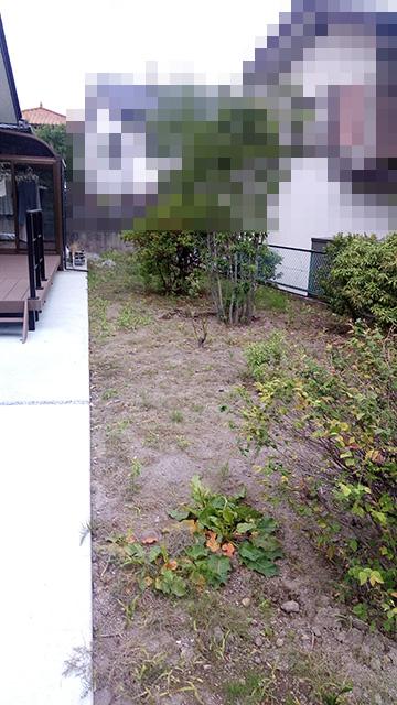 除草剤散布4日後の庭