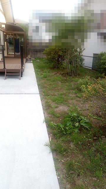 除草剤散布前の庭